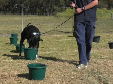 conan_truffle_hunt_training