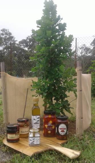 localregionalglobalfoodtruffletree
